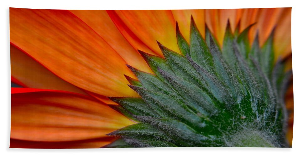 Daisy Bath Sheet featuring the photograph Daisy Delight by Frozen in Time Fine Art Photography