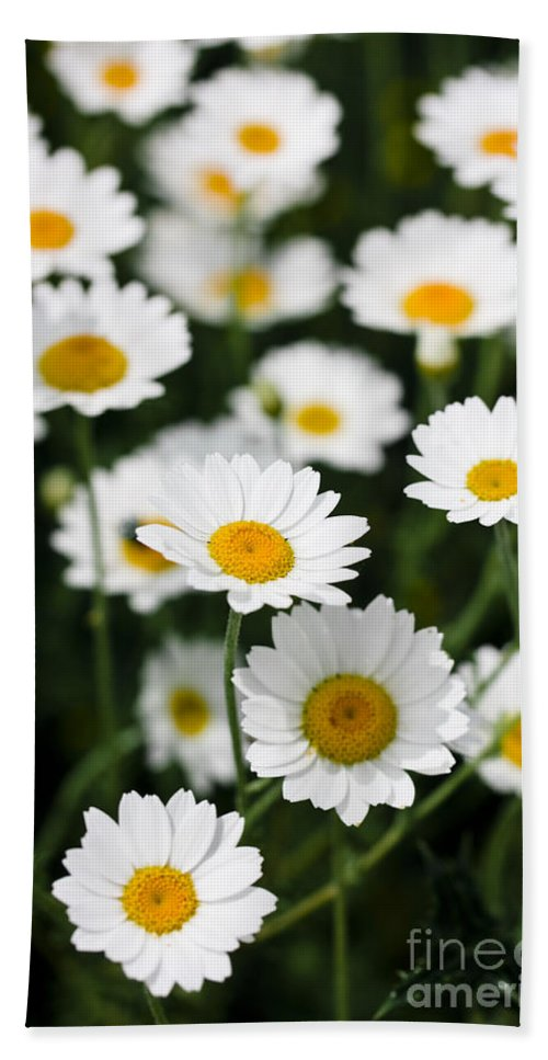 Daisy Hand Towel featuring the photograph Daisy In A Field by Simon Bratt Photography LRPS