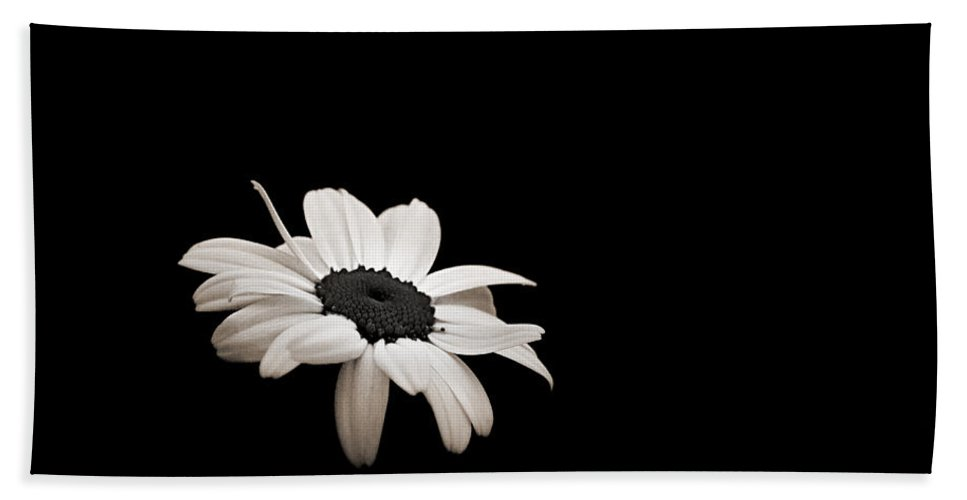 Wildflower Bath Sheet featuring the photograph Daisy In The Dark by Bill Pevlor