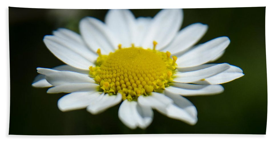 Background Hand Towel featuring the photograph Daisy On Green by Michael Goyberg