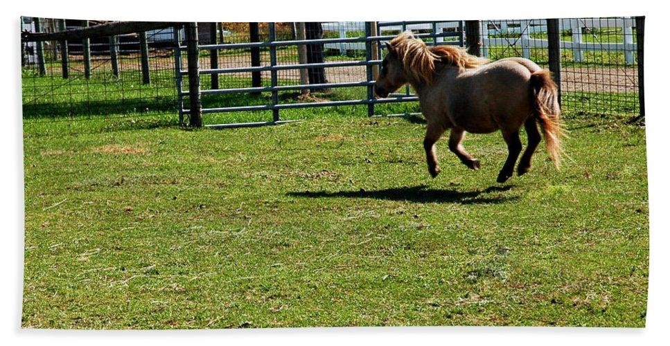 Usa Bath Sheet featuring the photograph Dancing Pony by LeeAnn McLaneGoetz McLaneGoetzStudioLLCcom
