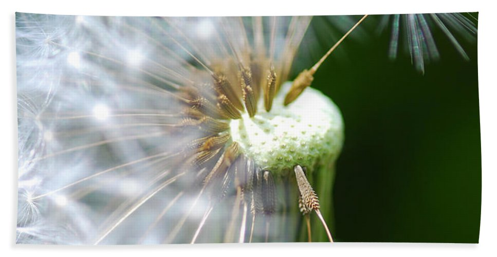 Optical Playground By Mp Ray Hand Towel featuring the photograph Dandelion Seeds by Optical Playground By MP Ray