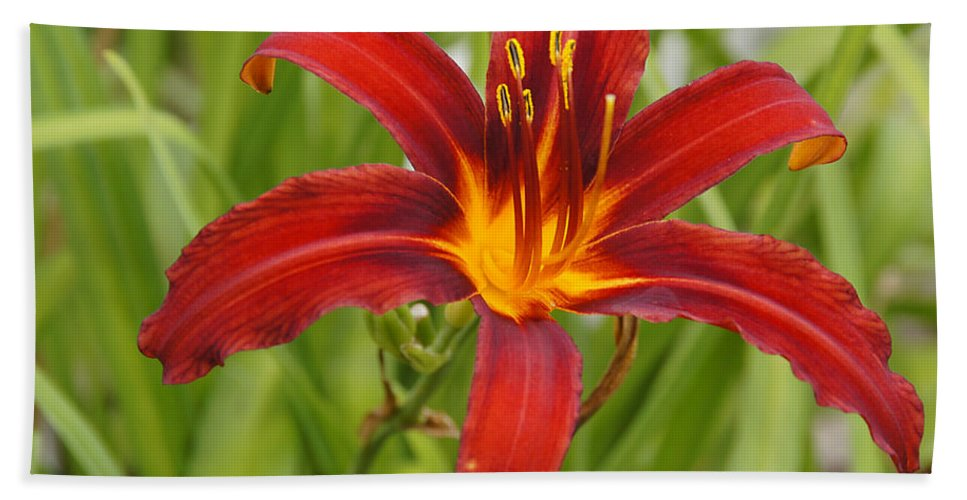 Day Lilly Hand Towel featuring the photograph Day Lilly In Diffused Daylight by Mick Anderson