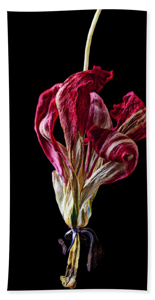 Dead Hand Towel featuring the photograph Dead Dried Tulip by Garry Gay