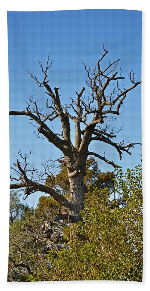 Nature Bath Sheet featuring the photograph Dead Tree by Debbie Portwood