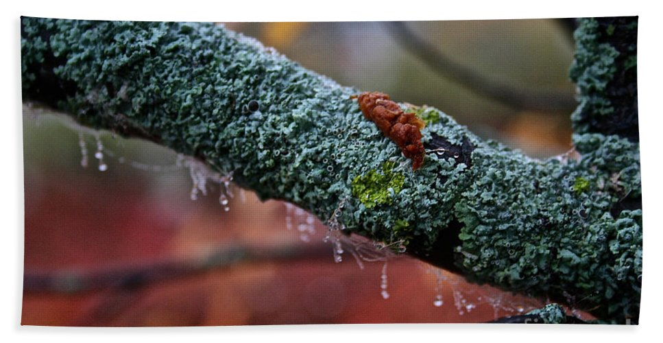 Outdoors Hand Towel featuring the photograph Decorated Branch by Susan Herber