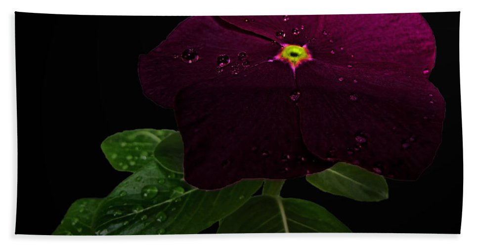 Nature Bath Sheet featuring the photograph Deep Burgandy Impatient by Debbie Portwood