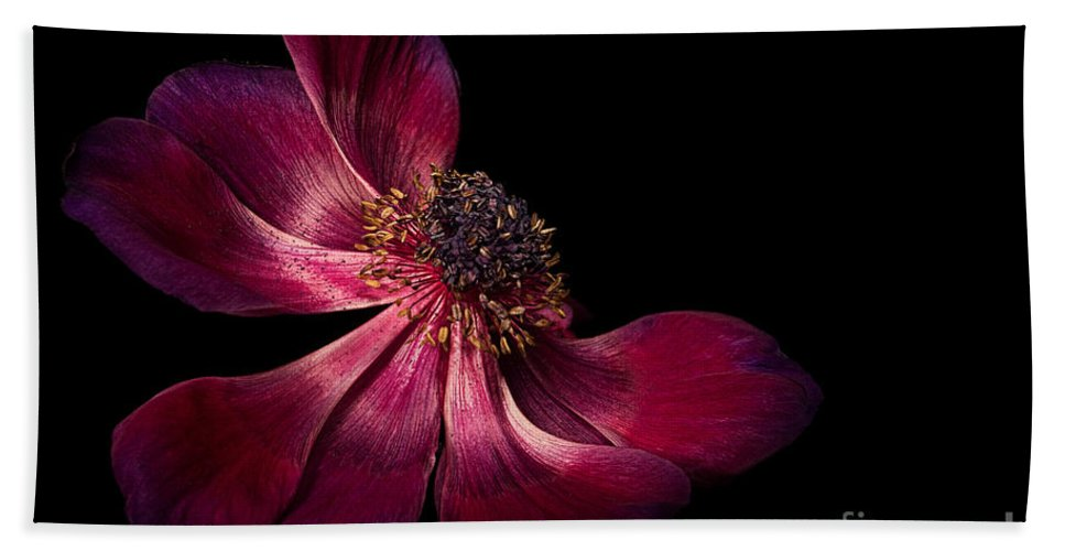 Anemone Bath Sheet featuring the photograph Deep Pink Anemone - 2 by Ann Garrett