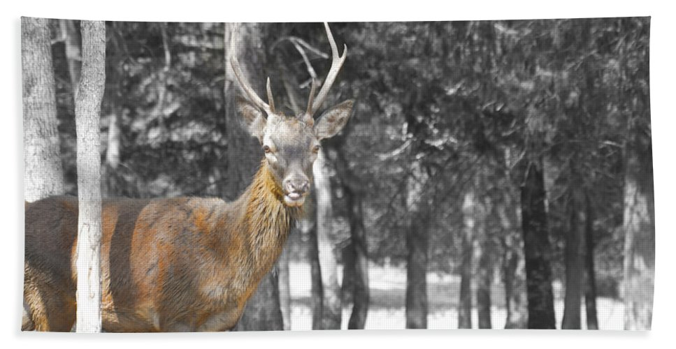 Deer Hand Towel featuring the photograph Deer In The Forest by Douglas Barnard