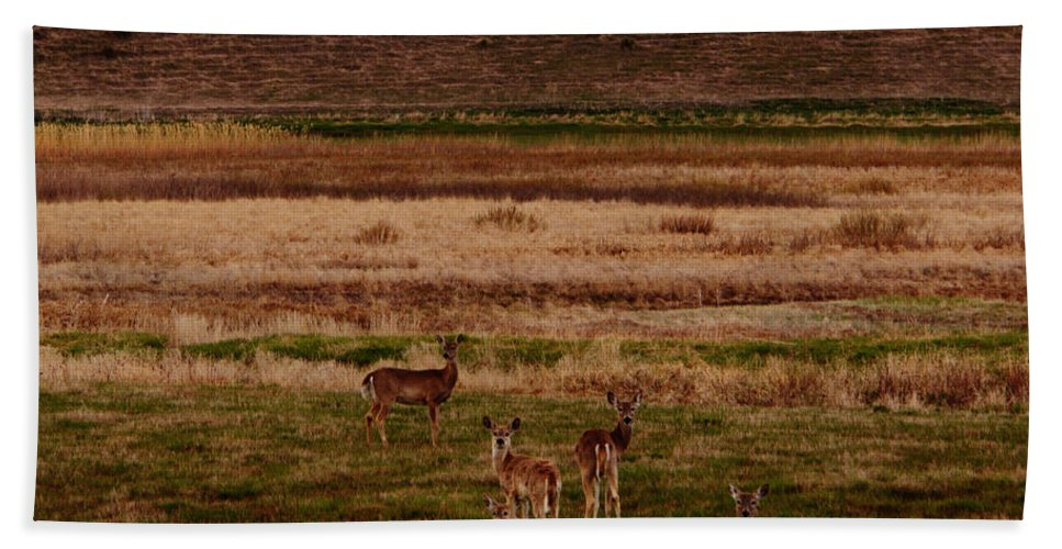 Deer Hand Towel featuring the photograph Deer In The Golden Meadow by Rebecca Akporiaye