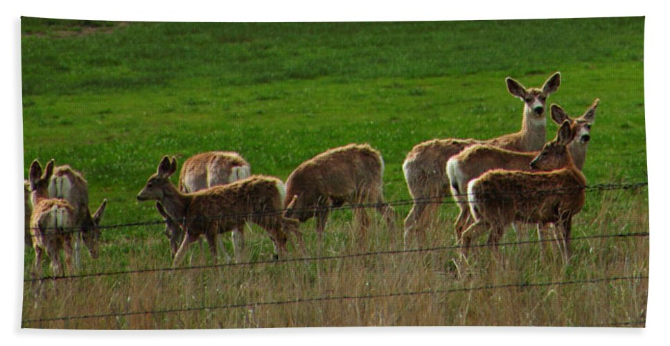 Deer Hand Towel featuring the photograph Deer In The Meadow by Rebecca Akporiaye