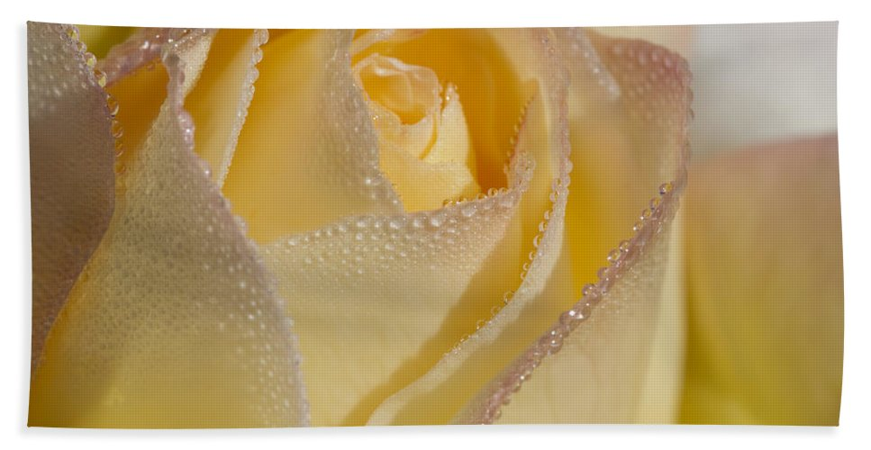 Rose Bath Sheet featuring the photograph Dew Bejeweled Peace Rose by Kathy Clark