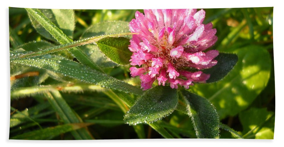 Close Up Bath Sheet featuring the photograph Dew Covered Clover Blossom by Kent Lorentzen