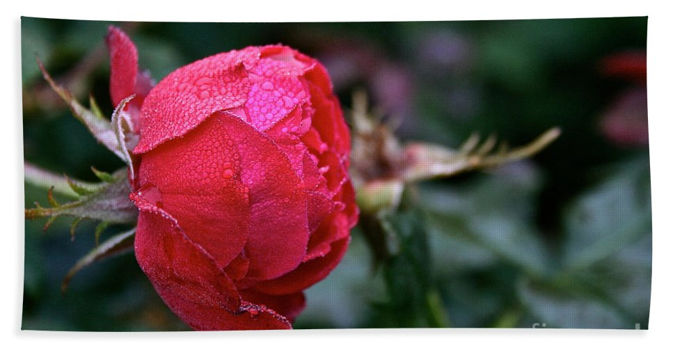 Flower Hand Towel featuring the photograph Dew Drenched Rose by Susan Herber