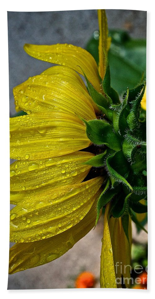 Plant Bath Sheet featuring the photograph Dew Droop by Susan Herber