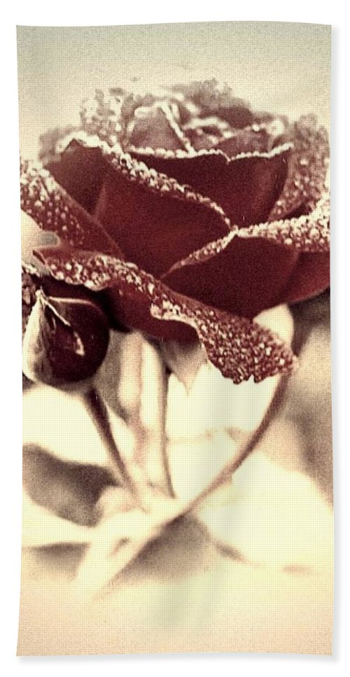 Rose Bath Sheet featuring the photograph Dewy Rose by Bonnie Willis