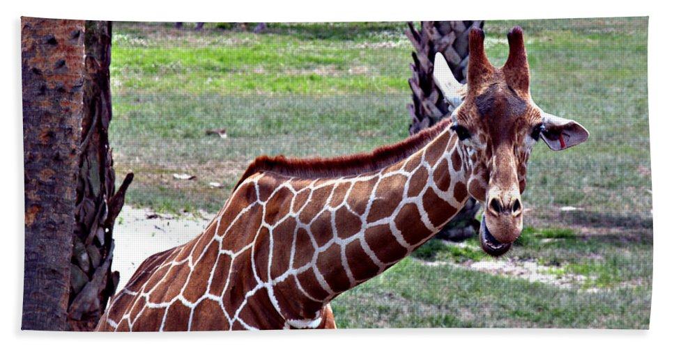 Giraffe Bath Sheet featuring the photograph Did You Say Smile by Bob Johnson