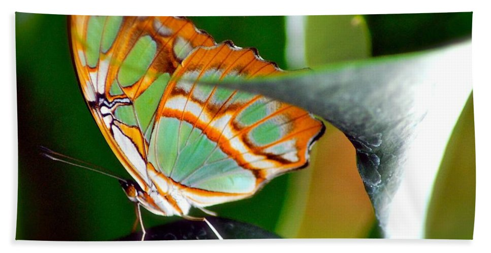 Butterfly Hand Towel featuring the photograph Dido Longwing Butterfly by Peggy Franz
