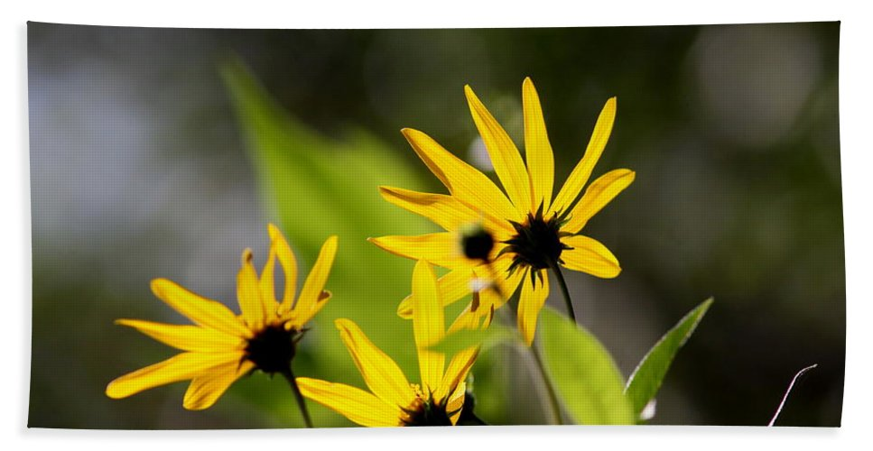 Flower Bath Sheet featuring the photograph Different Angle by Travis Truelove