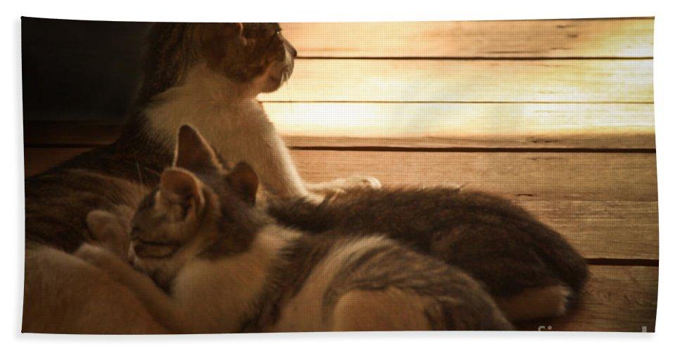 Kittens Nursing Bath Sheet featuring the photograph Dinner Time by Kim Henderson