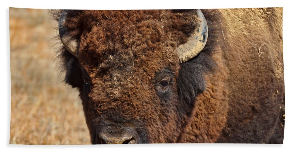 dirty Nose Hand Towel featuring the photograph Dirty Nose by Alan Hutchins