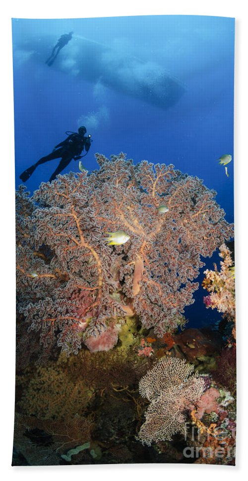 Diver Hand Towel featuring the photograph Diver Swims Over Sea Fans, Indonesia by Todd Winner