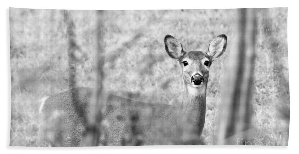Deer Hand Towel featuring the photograph Doe A Deer. by Cheryl Baxter
