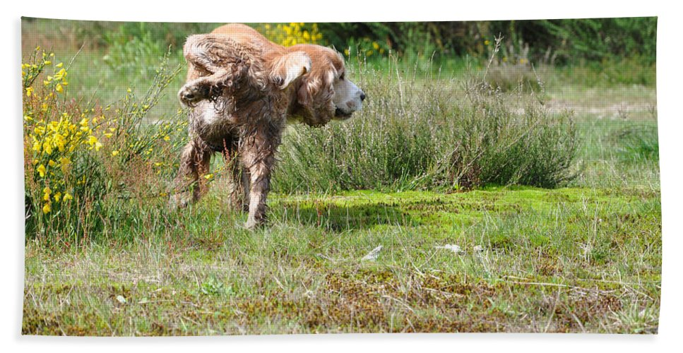 Dog Bath Sheet featuring the photograph Dog Making A Pee by Mats Silvan