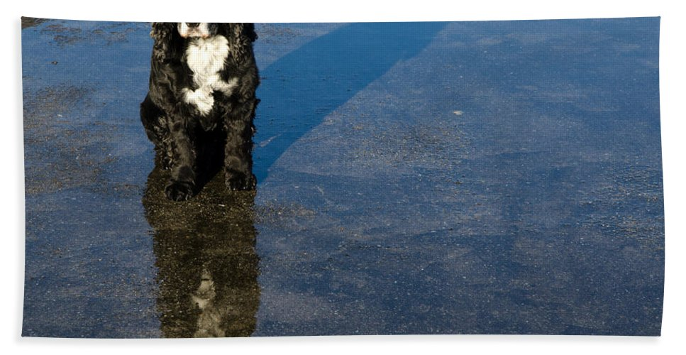 Dog Hand Towel featuring the photograph Dog With Reflections And Shadow by Mats Silvan
