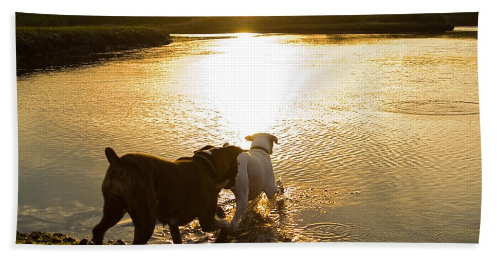 Boxer Hand Towel featuring the photograph Dogs At Sunset by Stephanie McDowell