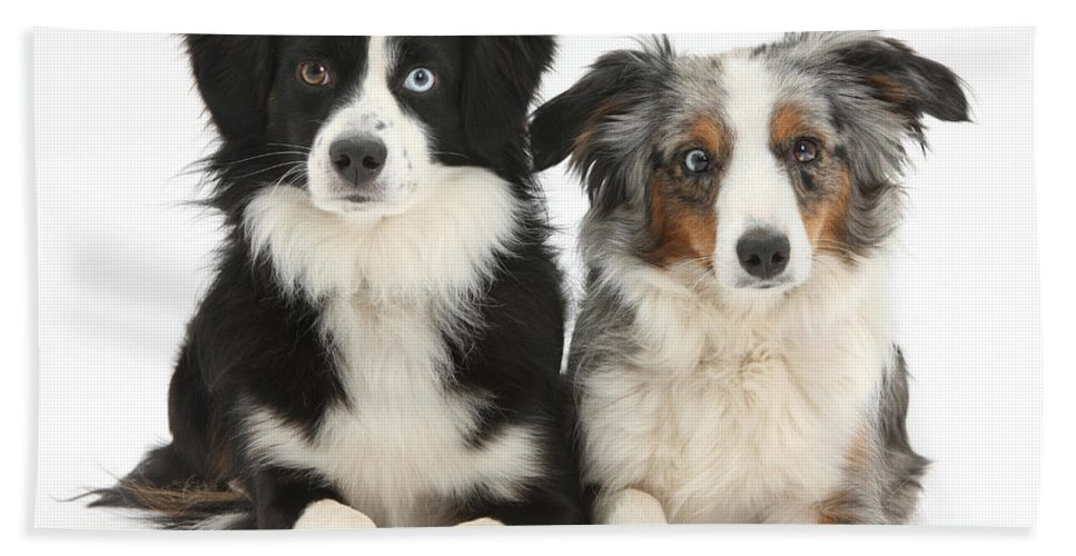 Nature Hand Towel featuring the Dogs With Different-colored Eyes by Mark Taylor