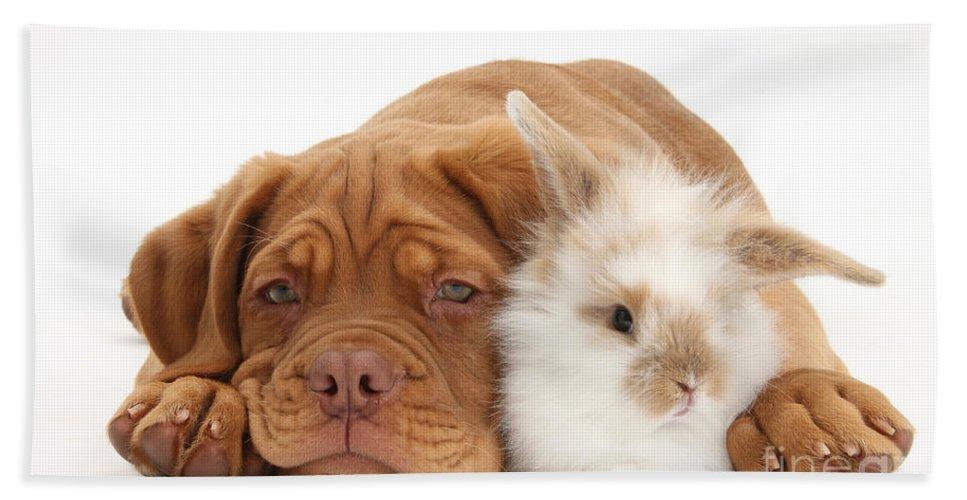 Dogue De Bordeaux Hand Towel featuring the photograph Dogue De Bordeaux Puppy With Bunny by Mark Taylor