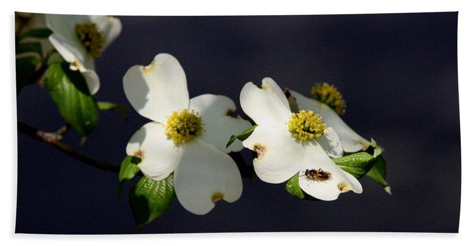 Dogwood Bath Sheet featuring the photograph Dogwood Blossom - Beelightful by Travis Truelove