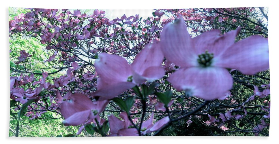 Pink Dogwood In Bloom Hand Towel featuring the photograph Dogwood by Nancy Patterson