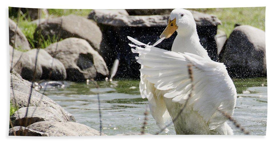 Usa Hand Towel featuring the photograph Doin The Duck Splash by LeeAnn McLaneGoetz McLaneGoetzStudioLLCcom