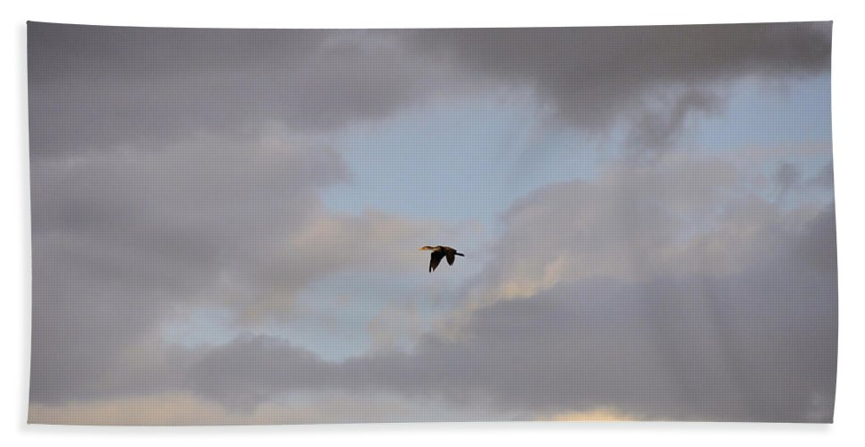 Cloud Bath Sheet featuring the photograph Double-crested Cormorant by Rich Bodane