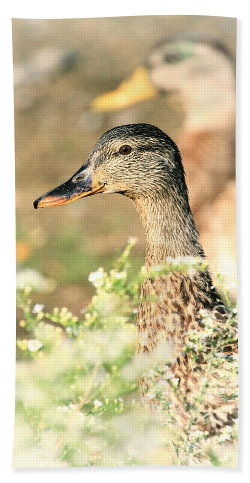 Mallard Bath Sheet featuring the photograph Double Duck by Karol Livote