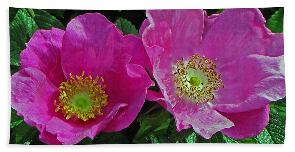 Wild Roses Bath Sheet featuring the photograph Double Wild Rose by Tikvah's Hope