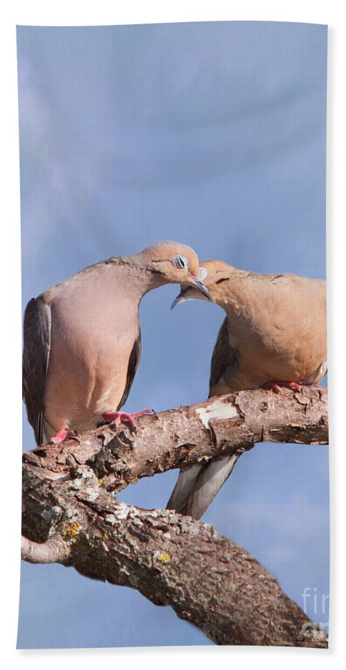 Mourning Dove Bath Sheet featuring the photograph Dove Devotion by Betty LaRue