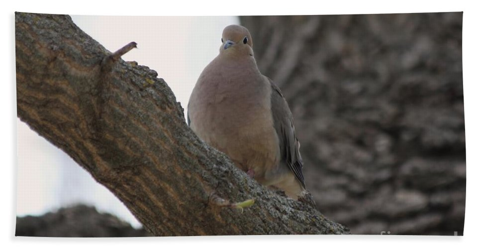 Dove Bath Sheet featuring the photograph Dove by Lori Tordsen
