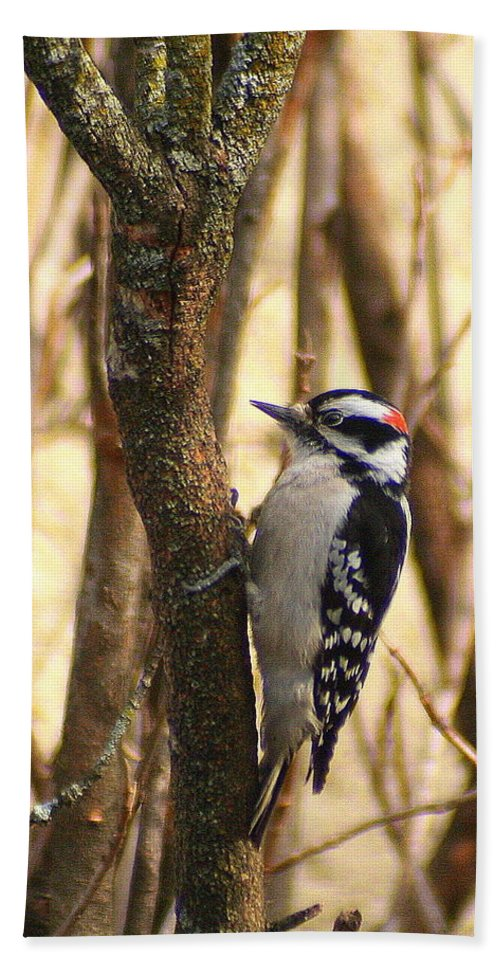 Downy Woodpecker Bath Sheet featuring the photograph Downy In The Bushes by Laurel Talabere