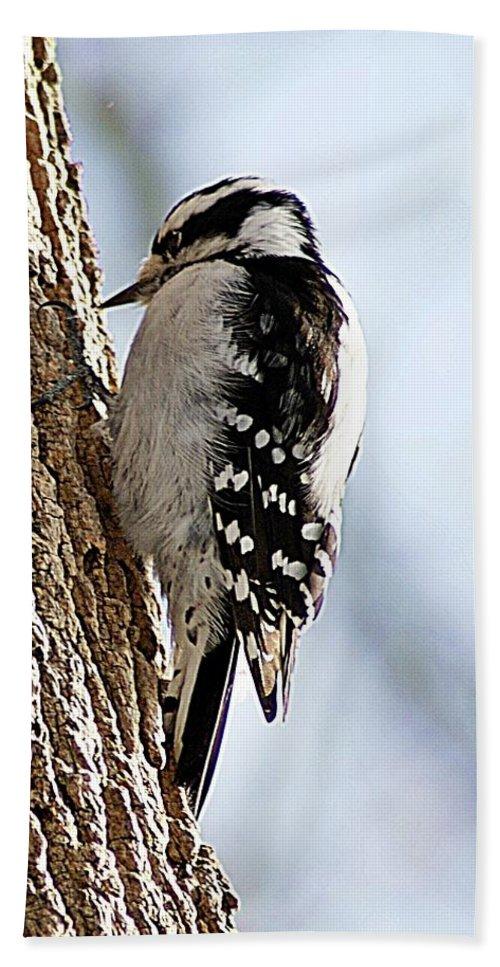Downy Bath Sheet featuring the photograph Downy Woodpecker 4 by Joe Faherty