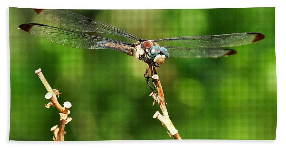 Dragon Fly Bath Sheet featuring the photograph Dragon Fly by Susan Cliett
