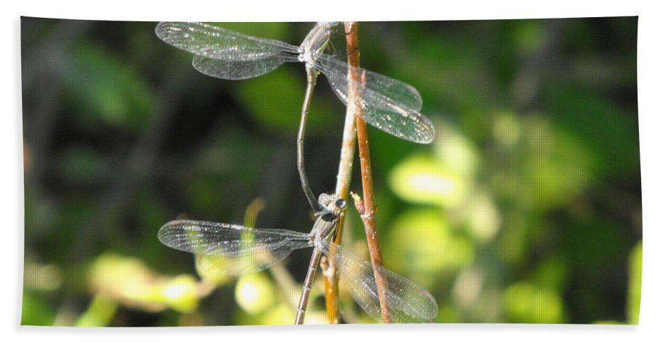 Dragonflies Bath Towel featuring the photograph Dragonflies by Paulina Roybal
