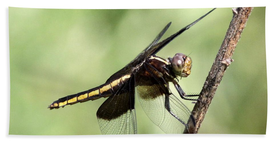 Insect Bath Sheet featuring the photograph Dragonfly - Yellow Stripe by Travis Truelove