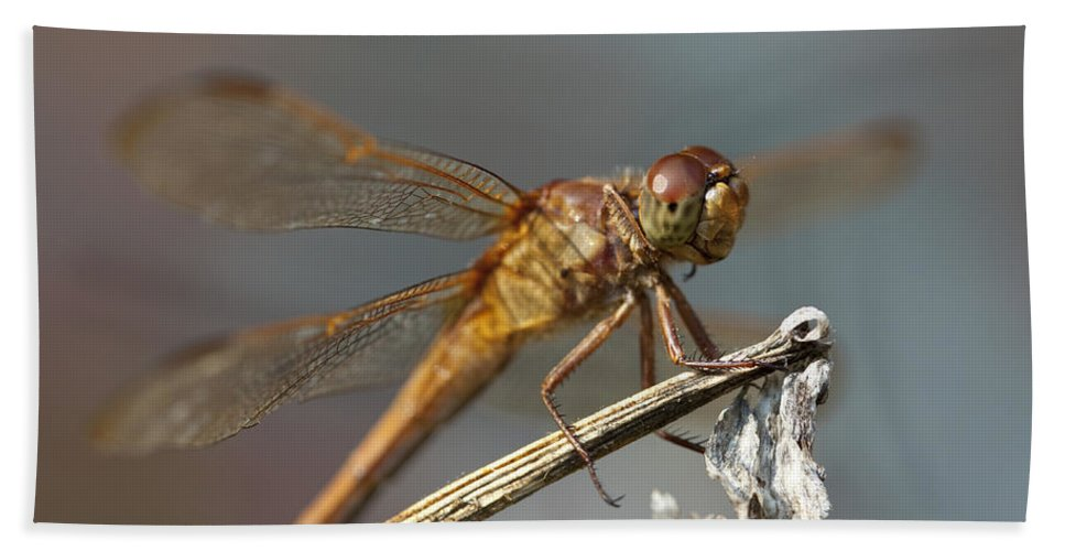 Dragonfly Bath Sheet featuring the photograph Dragonfly by Amy Jackson