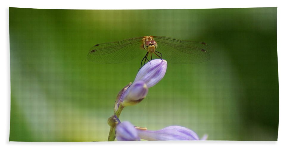 Dragonflies Hand Towel featuring the photograph Dragonfly Connection by Ben Upham III