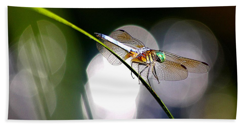 Dragonfly Hand Towel featuring the photograph Dragonfly Dance by David E C Allingham