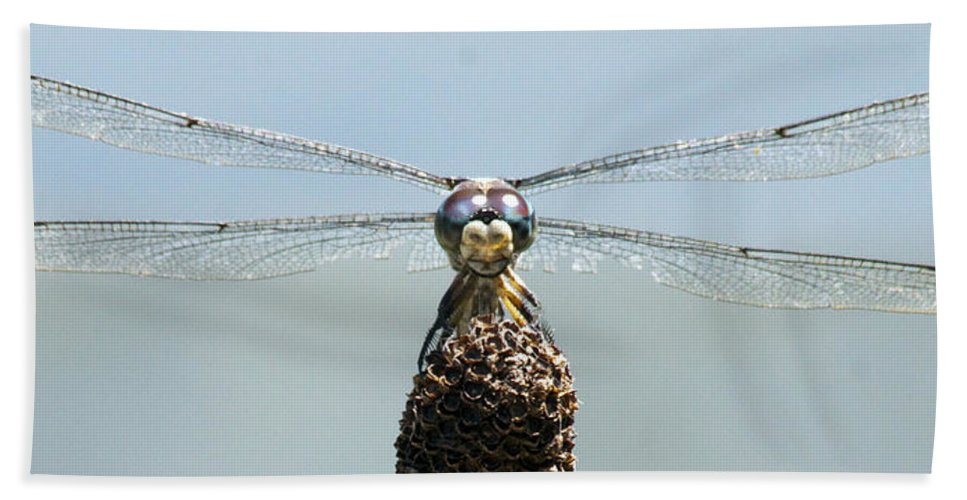 Dragonfly Bath Sheet featuring the photograph Dragonfly by Darleen Stry