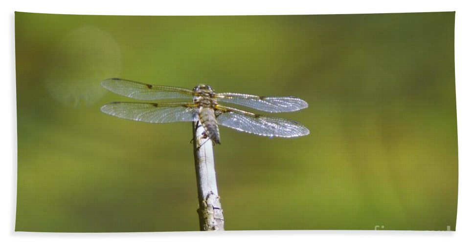 Dragonflies Hand Towel featuring the photograph Dragonfly In The Sun by Jeff Swan